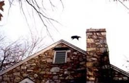 racoon flying over a chimney